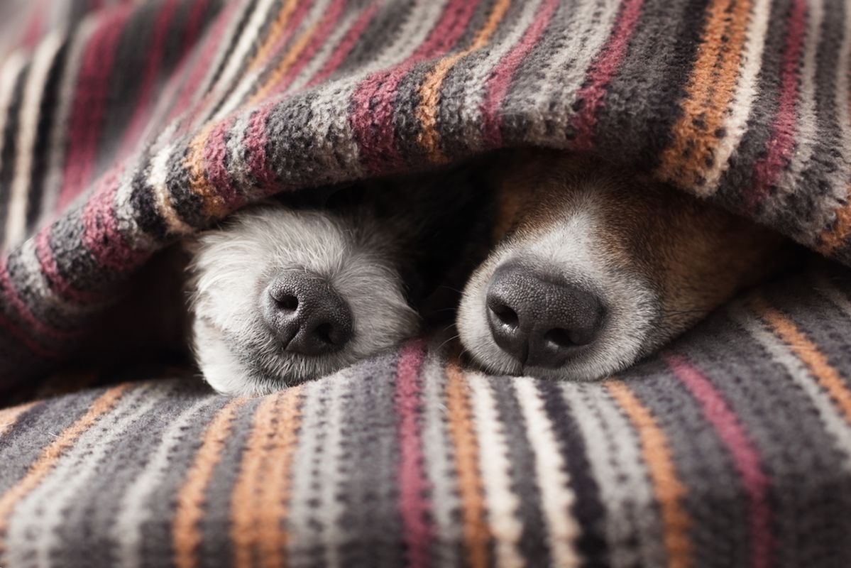 спящие собачки